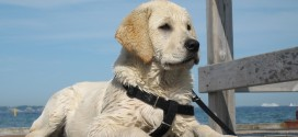10-caratteristiche-che-gli-imprenditori-possono-imparare-dai-cani
